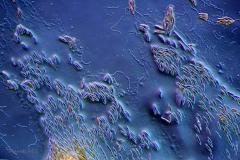 135. Okrzemki / Diatoms