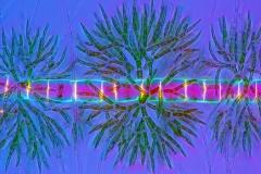 7. Zielenica (Draparnaldia) / Green algae