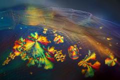 44. Kryształki na pancerzyku rozwielitki / Crystals on cladoceran carapace
