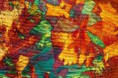 10. Kryształki na pancerzyku wioślarki / Crystals on cladoceran carapace
