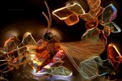 71. Maleńka muszka uwięziona w krystalizującej Coca Coli / Tiny fly trapped in crystalizing Coca Cola