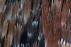 30. Skrzydło motyla (Błyszczka jarzynówka) / Autographa gamma wing