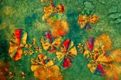 9. Kryształki na pancerzyku wioślarki / Crystals on cladoceran carapace